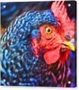 Beverlys Chicken Acrylic Print