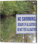 Beware Of Alligators Acrylic Print