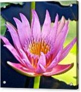 Beyond Beautiful Water Lily Acrylic Print