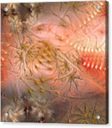 Beyond Solipsism Acrylic Print