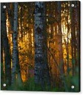 Beyond The Beaver Pond Horizontal Acrylic Print
