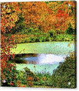 Beyond The Birch Pathway Acrylic Print