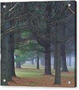 Beyond The Pines Acrylic Print