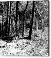 Beyond The Trees Acrylic Print