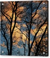 Beyond The Trees Acrylic Print