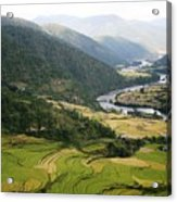 Bhutan Rice Fields Acrylic Print