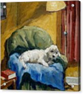 Bichon Frise On Chair Acrylic Print by Thor Wickstrom