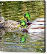Bidwell Ducks In Fall Acrylic Print