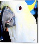 Big Beak Ben Acrylic Print