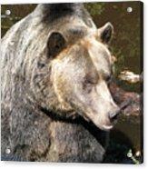 Big Bear Acrylic Print