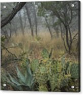 Big Bend Fog On Lost Mines Trail Acrylic Print