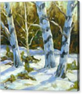 Big Birches In Winter Acrylic Print