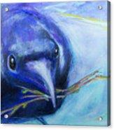 Big Blue Bird Acrylic Print