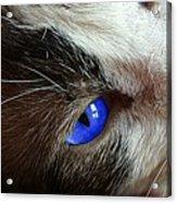 Big Blue Eyes Cat Acrylic Print