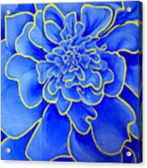 Big Blue Flower Acrylic Print by Geoff Greene