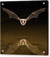 Big Brown Bat Reflection Acrylic Print