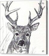 Big Buck Acrylic Print