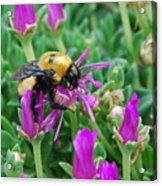 Big Bumblebee Acrylic Print