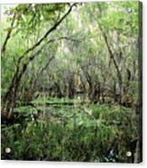 Big Cypress Preserve Acrylic Print