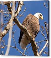 Big Eagle Acrylic Print
