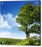 Big Elm Tree Near Corn Field Acrylic Print