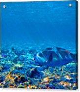Big Fish. Underwater World. Acrylic Print