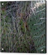 Big Fluffy Cactus Acrylic Print