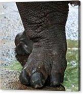 Big Foot Acrylic Print