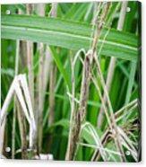 Big Grass Blade Acrylic Print