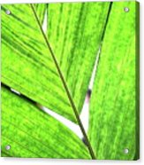 Big Green Leaf . 7d5763 Acrylic Print by Wingsdomain Art and Photography
