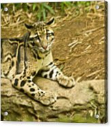 Big Kitty Cat Acrylic Print