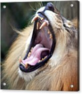 Big Mouth Acrylic Print