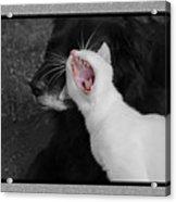Big Mouth Pete Acrylic Print