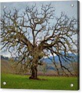 Big Oak Acrylic Print