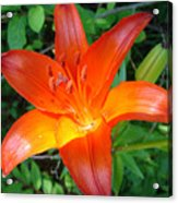 Big Orange Acrylic Print