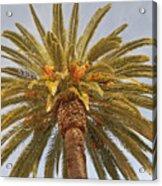 Big Palm Acrylic Print