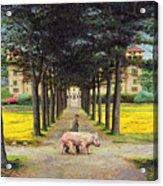 Big Pig - Pistoia -tuscany Acrylic Print