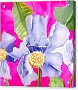 Big Pink  Flowers Acrylic Print