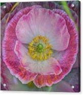 Big Poppy 4 Acrylic Print