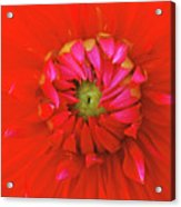 Big Red Acrylic Print