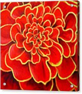 Big Red Flower Acrylic Print
