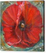 Big Red Poppy Acrylic Print