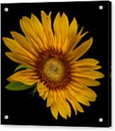 Big Sunflower Acrylic Print