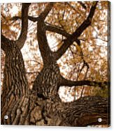 Big Tree Acrylic Print by James BO  Insogna