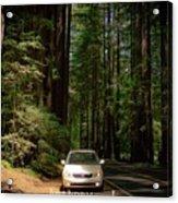 Big Tree Road Acrylic Print
