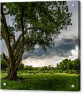 Big Tree - Tall Cottonwood And Storm In Texas Panhandle Acrylic Print