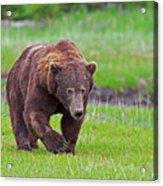 Big Ugly Grizzly Boar Claws Acrylic Print