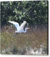 Big White Bird Flying Away Acrylic Print