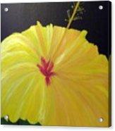 Big Yellow Hibiscus Acrylic Print