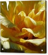 Big Yellow Rose Acrylic Print